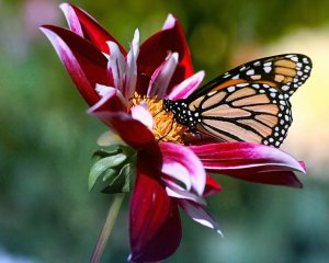 flowers__and__butterfly
